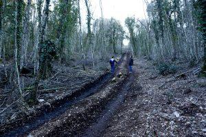La strada aperta ai danni del bosco