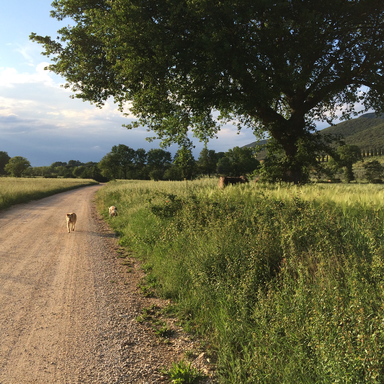 DOG TREKKING SUI MONTI AMERINI