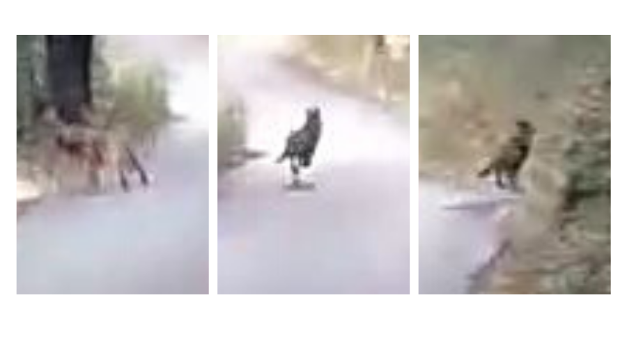 Alcuni frame dal video
