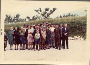 Cocciano anni 70. Sullo sfondo viti maritate su acero campestre ben potato in mezzo a un campo di grano.