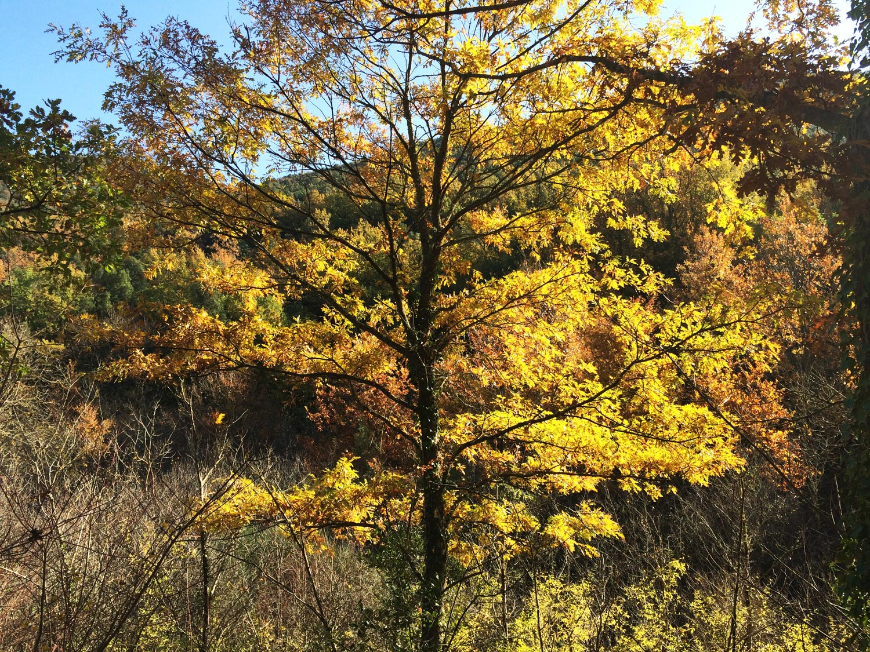 Bosco foliage sui monti amerini